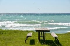 Sandbanks West Pt Picnic Table Gulls #3392