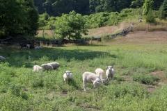 Sheep Pasture Black River #3406