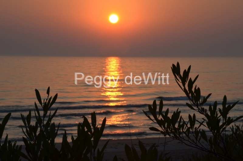 Sandbanks Sunset Plant Foreground #3380