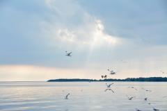 Sandbanks Sky Seagulls #3374
