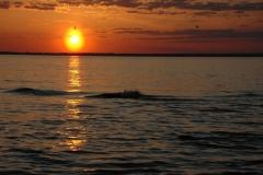 Sandbanks Sunset Birds #3379