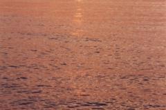 Sunset (v) #1592 s