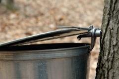 Sugar Bush Bucket 06 #709