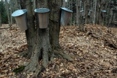 Sugar Bush Buckets #1792