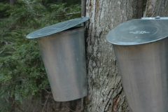 Sugar Bush Buckets #716 s