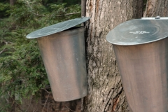 Sugar Bush Buckets #716