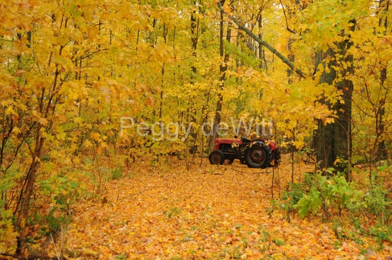 Tractor Fall Woods #1942