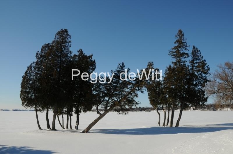Trees Isaiah Tubbs Winter #2443