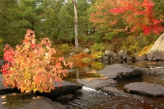 Flinton Fall Scenes #1830
