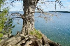Little Bluff Roots #3292