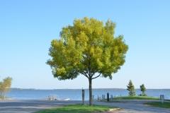 Tree Belleville#2868