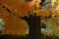 Tree Fall (v) #730
