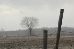 Tree Fence Amherst Island Winter #2700