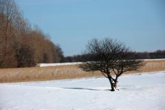 Tree Winter #736