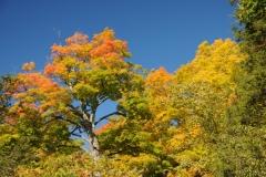 Trees Black River Fall Colours #2774