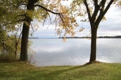 Trees-McKenzie-Fall-3859
