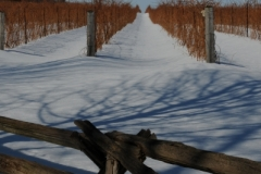 The Grange Fence Winter (v) #2312