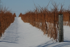 The Grange Vines Winter #2314