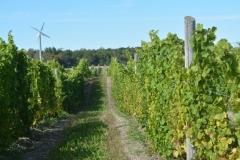 Vineyard Sugar Bush #3442