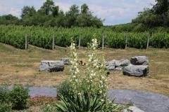 Vineyard Sugarbush Yucca #3443
