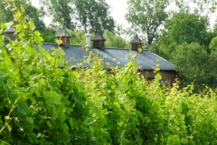 Vineyard The Grange #2712