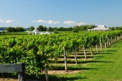Vineyard Waupoos #2713