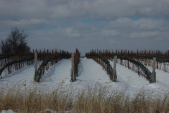 Vineyard Winter #1106