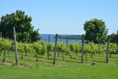 Waupoos Cider Co View #3453