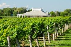 Waupoos Winery Vineyard #2720