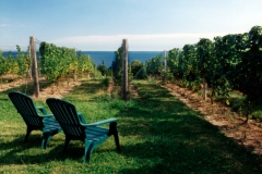 Vineyard Chairs #328