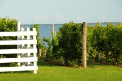 Vineyard Waupoos #2316