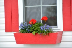 Flowers Red Window Box #3236