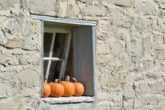 Pumpkins Window Cider Co #3324