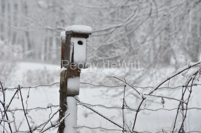 Birdhouse Winter #3039