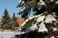 Barn West Lake Fir Trees Winter #2116