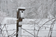 Birdhouse Winter #3039