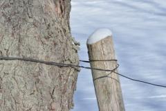 Fence Post Winter #2974