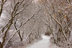Lane Ridge Road Winter #1028