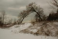 Trees Sandbanks West Point Winter #1924
