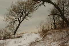 Trees Sandbanks West Point Winter (v) #1925