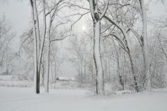 Wellington Trees Snowy Winter #3475